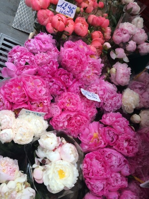 Some beautiful peonies that I wanted to buy...